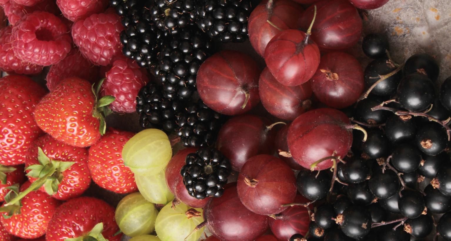 Fruits et légumes producteurs Uzès